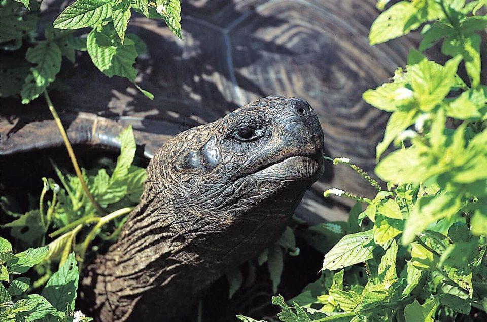 Islas GalápagosViaje de Darwin a las Islas Galápagos